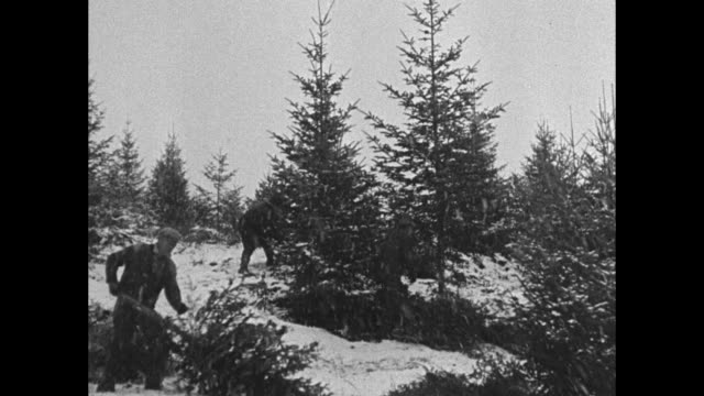 new hampshire hills yield record crop of christmas trees woodsmen cut down hundreds for holidays as swirling snow blankets countryside / men cutting... - christmas tree stock videos & royalty-free footage