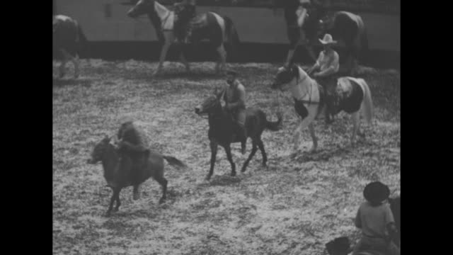 """""""new york's wild west! rodeo at madison square garden no place for drugstore cowboys"""" / tilt down vls of rodeo participants riding horses in... - bucking stock videos & royalty-free footage"""