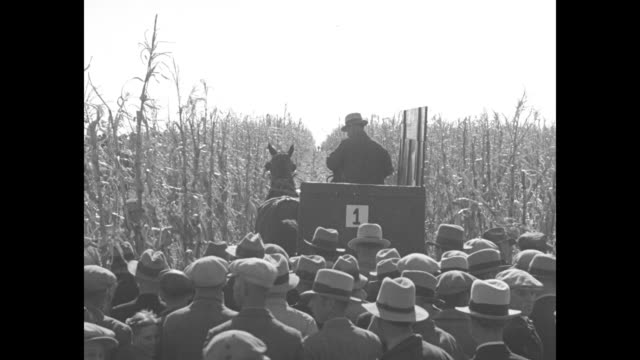 news flashes / ls large crowd of spectators stands near wooden carts at the edge of a cornfield / rear shot man driving horse cart moves through... - husking stock videos & royalty-free footage