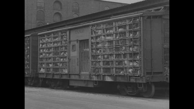 vídeos de stock e filmes b-roll de ready to smash poultry racketeers / wv railroad yards in new york city / pan down line of railroad cars loaded with chicken cages / closer view of... - galinha ave doméstica