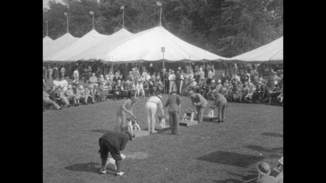 """""""record array of champions benched at nj dog show - morris and essex kennel club at madison draws prize entries of outstanding breeds"""" / at outdoor... - sheepdog stock videos & royalty-free footage"""