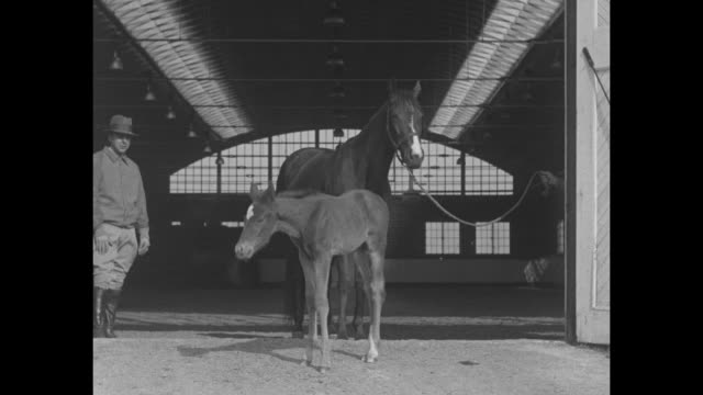 """""""stork visits turf royalty - meet reigh count jr with his mamma anita peabody who gave up racing for domestic bliss at cary, ill"""" / mother horse... - 子馬点の映像素材/bロール"""