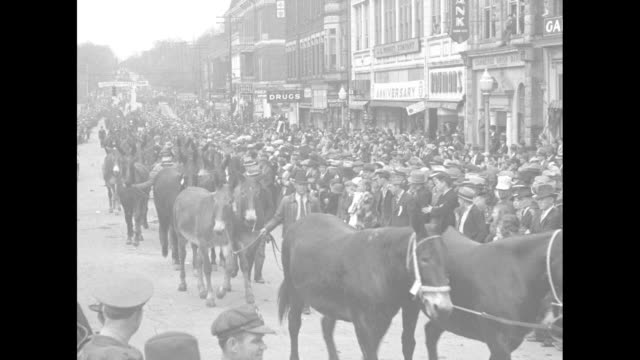 """""""tennessee"""" superimposed over young woman on mule leading mule parade down columbia, tennessee street during mule day celebrations / people leading... - tennessee stock videos & royalty-free footage"""