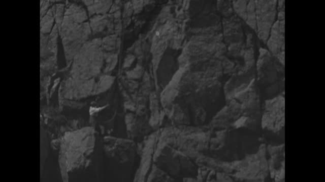 """""""the home of the falcon"""" and """"on the rocky coast of western britain, there still remain a few peregrine falcons for the naturalist to observe"""" /... - bird hunting stock videos & royalty-free footage"""