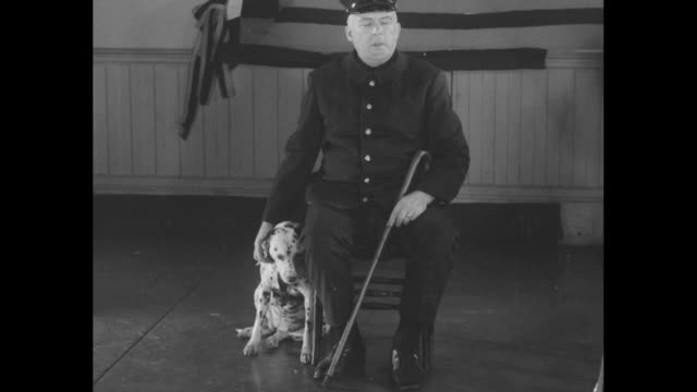 these lionhearted dogs won medals for feats of bravery fourlegged heroes pose with their owners at new york antivivisection society / a group of... - dalmatian dog stock videos and b-roll footage