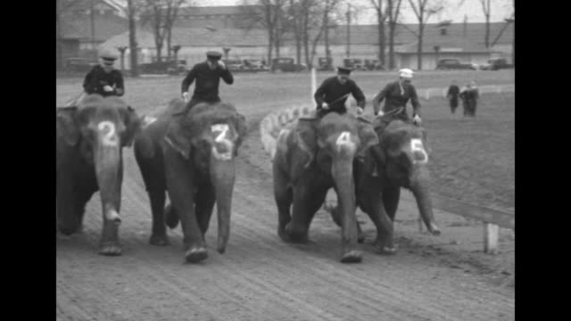 "stockvideo's en b-roll-footage met ""tons of speed"" / vs crowds in stand and men making bets between themselves / five elephants with numbers painted on their heads lift jockeys up with... - jockey"