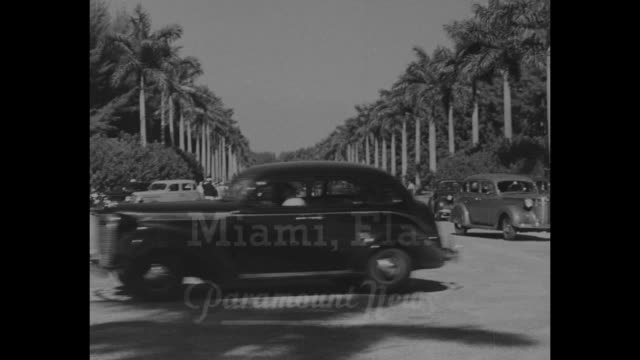 turf fans go south / ms cars on driveway into hialeah park race track / aerial crowds in park / men groom horse / war admiral in stall / ms car on... - hialeah stock videos & royalty-free footage