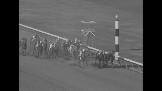 turf stars warm up in florida superimposed over horse race / hialeah park race track / ls crowd / horses headed toward starting gate / race begins /... - hialeah stock videos & royalty-free footage