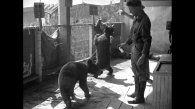 'World's Fair Run Thrills Little Ones' / MS families walk around plaza / VS girl about 10 has her photograph taken / VS chained bear cubs dance for...