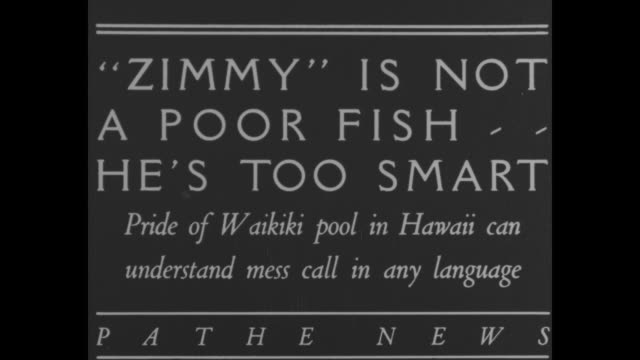 """world's smartest fish"" / title card: ""zimmy is not a poor fish, he's too smart- pride of waikiki pool in hawaii can understand mess call in any... - hawaii islands stock videos & royalty-free footage"