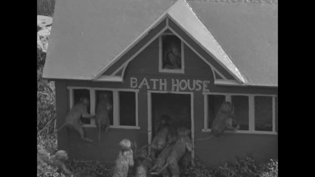 """""""zoociety moves west, milwaukee - island resort opens! summertime finds 'upper set' climbers from far east swinging to exclusive haunts"""" / men stand... - bathhouse stock videos & royalty-free footage"""