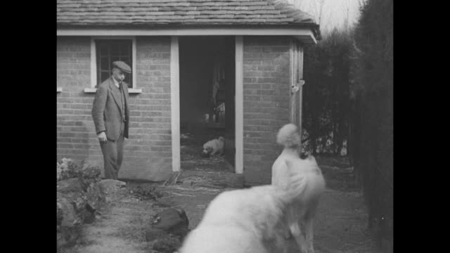 "vidéos et rushes de title ""london"" superimposed on white great pyrenees dog following man; he lifts dog's paws to his shoulders / pan from doorway in brick walled shed... - suit"