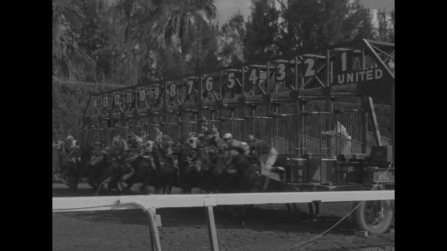 title superimposed on high angle view of crowd they're off at hialeah / infield lake with flamingos swans / crowd in grandstands / starting gates... - hialeah stock videos & royalty-free footage
