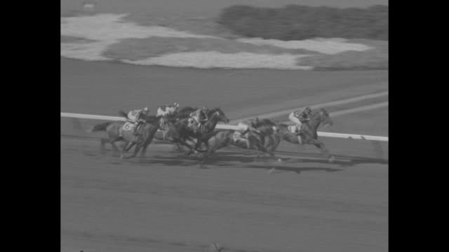 swaps sweeps calif stakes in record time superimposed over horses parading to post at hollywood park / spectators strain to watch action / horses... - starting gate stock videos and b-roll footage