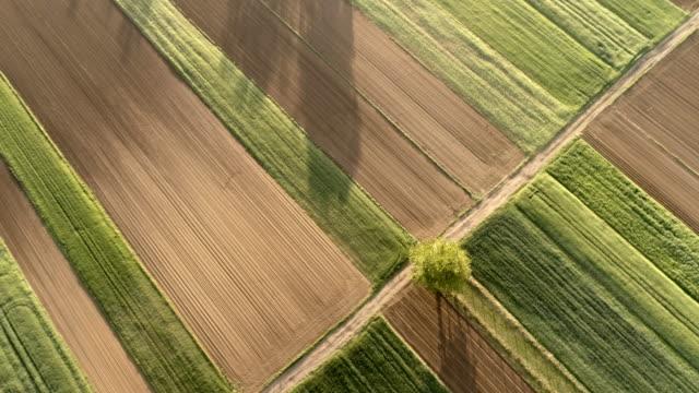vidéos et rushes de ms à ws antenne visualiser formulaire ci-dessus arbre ensoleillé, rural, idyllique et cultures - zoom arrière