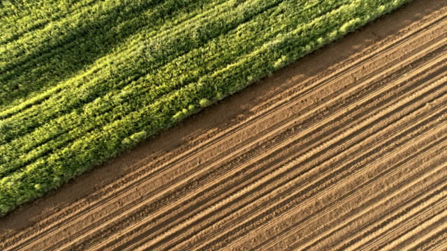 ms to ws aerial view rural plowed fields and green crops - contrasts stock videos & royalty-free footage