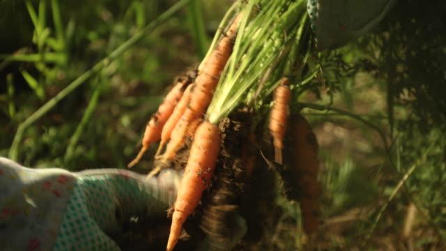 vídeos y material grabado en eventos de stock de ser comido - actividad de agricultura