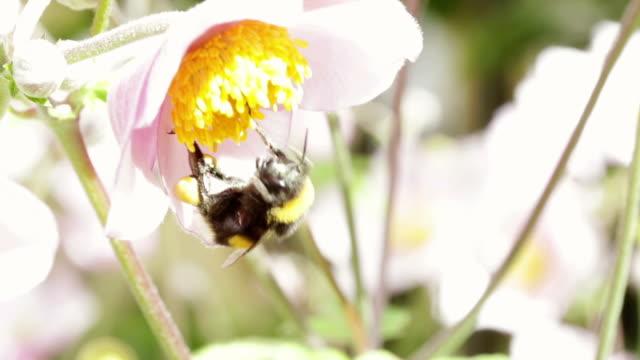 Pour abeille