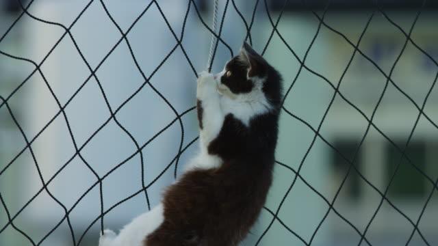 stockvideo's en b-roll-footage met cu zo to ms feral domestic kitten climbing down fishing net on dockside - kleine groep dieren