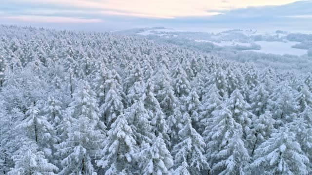 ms to ws idyllic snow covered treetops and rural landscape,prekmurje,slovenia - bare tree stock videos & royalty-free footage