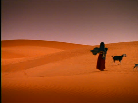 pan to shepherd with goat herd walking in desert / morocco - erbivoro video stock e b–roll