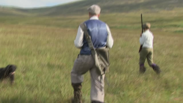 to some today is known as the glorious 12th the start of the grouse shooting season shows people out grouse hunting with guns and dogs interviews... - comportamento animale video stock e b–roll