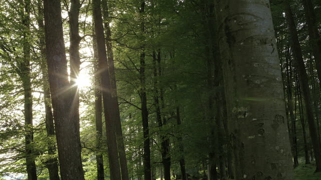 pan to sunlight bursting through trees in early morning - comunidad foral de navarra stock videos and b-roll footage