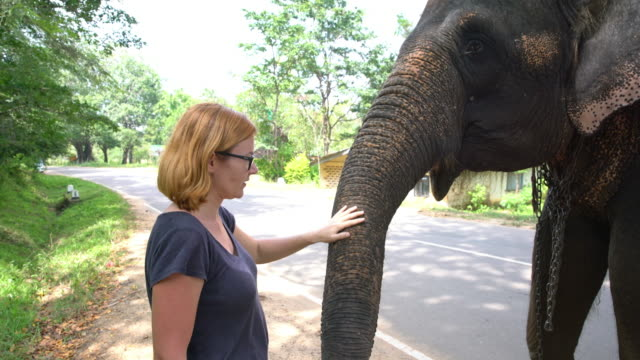 CU to MS Woman petting elephant at roadside,Sri Lanka