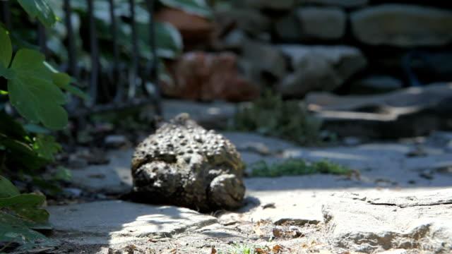 vídeos de stock e filmes b-roll de sapo pendurar em um terraço - sapo