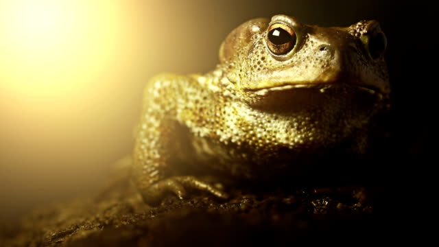 toad in the wild at night roadkilled - animal eye stock videos & royalty-free footage
