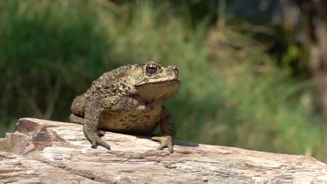 toad jumping slow motion - frog stock videos and b-roll footage