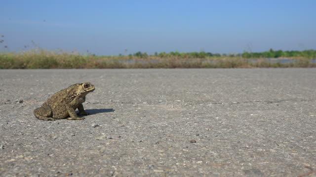 vídeos de stock e filmes b-roll de toad jumping slow motion - sapo