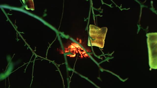 toast hangs from apple tree during wassailing festival, uk - 幸運点の映像素材/bロール