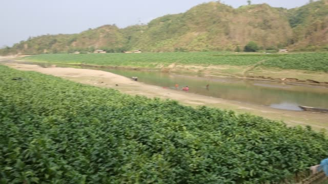 vidéos et rushes de tobacco cultivation in bandarban hill district of bangladesh raises hackles as some companies are managing to manoeuvre a web of incentives in cash... - chapeau de paille