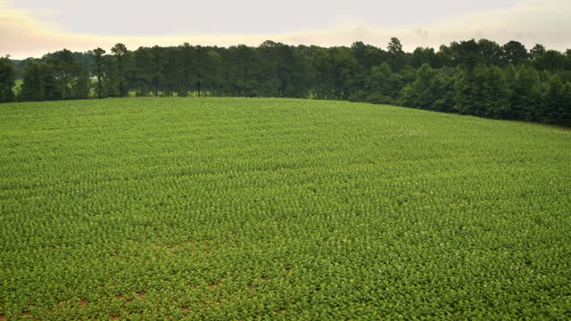 av tobacco fields, virginia, usa - virginia us state stock videos & royalty-free footage
