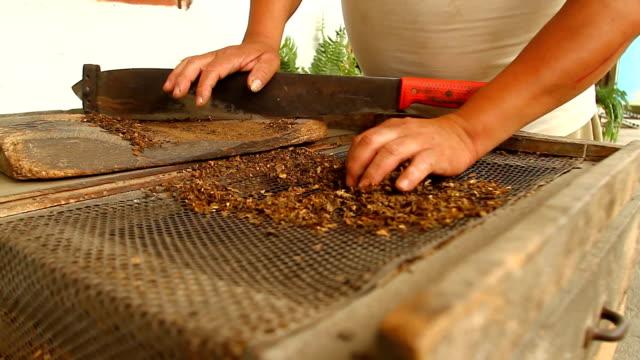 """tobacco prepared by elders in """"valle de la eterna juventud"""" - loja stock videos and b-roll footage"""