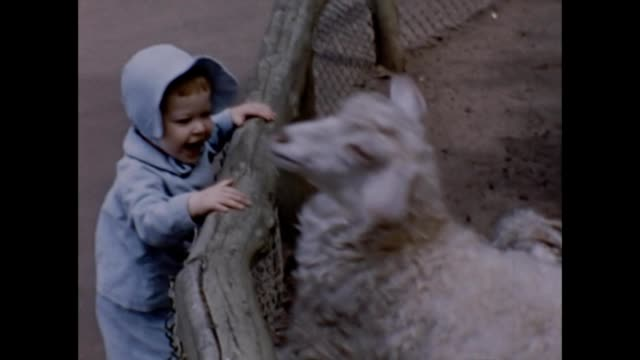 1956 toddler at children's zoo - zoo stock videos & royalty-free footage