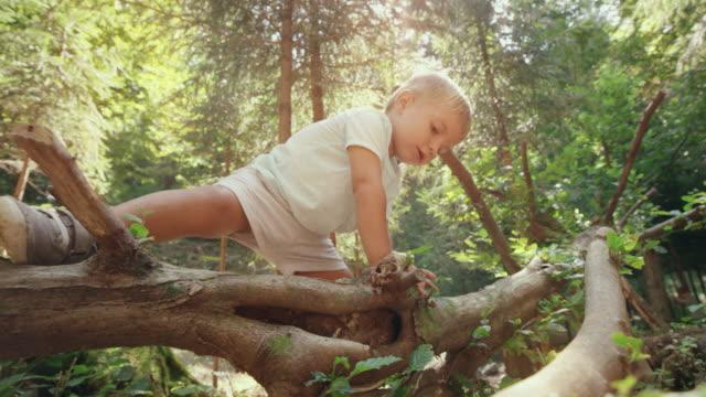 Kleinkind Jungen klettern die Zweige einen umgestürzten Baum im sonnigen Wald