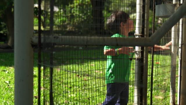 toddler boy closes gate - gabbia per gli uccelli video stock e b–roll