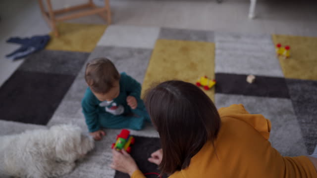 vídeos de stock e filmes b-roll de toddler boy, mother and maltese dog playing on carpet at home - tapete