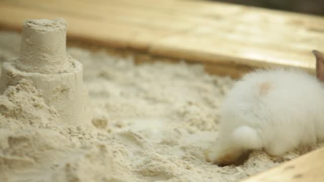 vídeos y material grabado en eventos de stock de toddler boy playing in garden sand pit with white bunny - sólo niños bebés