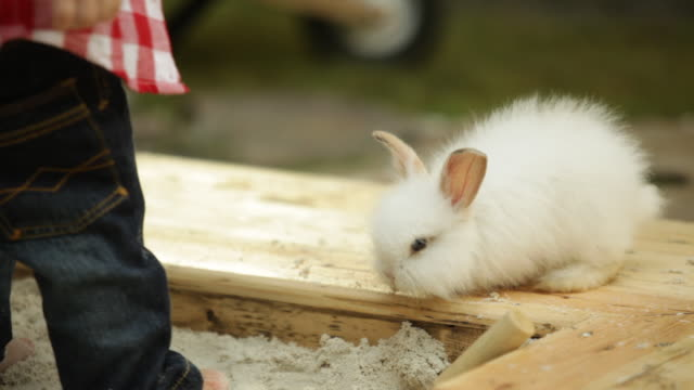 vidéos et rushes de toddler boy playing in garden sand pit with white bunny - lapin