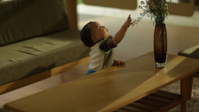 toddler boy pulling a flower in vase on coffee table - babies only stock videos & royalty-free footage