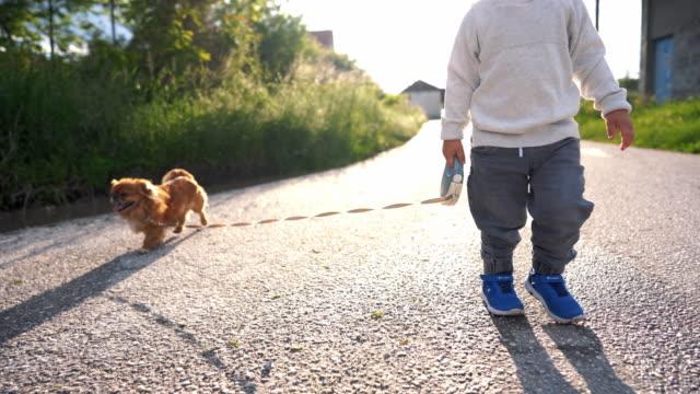 toddler boy walking his pekingese dog - baby boys stock videos & royalty-free footage