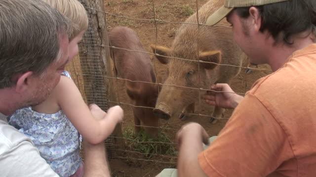 (HD1080i) für Kleinkinder, Kinder und Familie liebt Schweinen