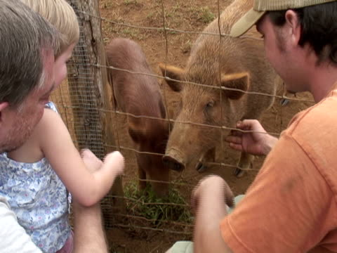 Toddler, Child and Family Loves Pigs