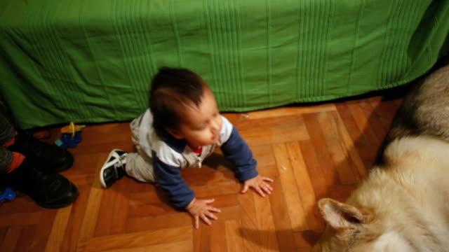 幼児クロールと遊ぶ若い秋田 - 床点の映像素材/bロール