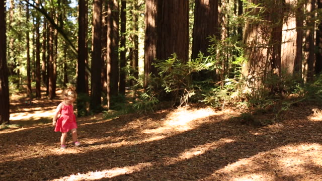 vídeos de stock, filmes e b-roll de a toddler girl playing and waking in a forest of redwood trees. - sequoia sempervirens