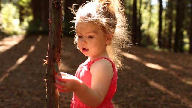vídeos y material grabado en eventos de stock de a toddler girl playing and waking in a forest of redwood trees. - bosque de secuoyas