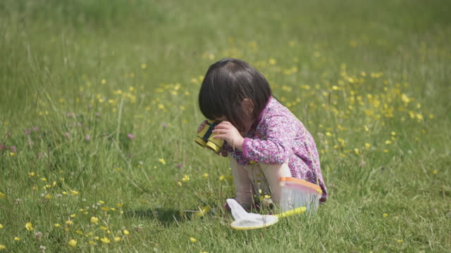 toddler girl playing in summer countryside,northern ireland - grass family stock videos & royalty-free footage